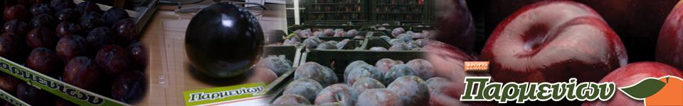 Χρόνια εμπειρίας και λεπτομερής έλεγχος της ποιότητας των προϊόντων μας,μας κάνουν έναν αξιόπιστο προμηθευτή των νωπών φρούτων